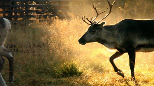 Aatsinki: The Story Of Arctic Cowboys still